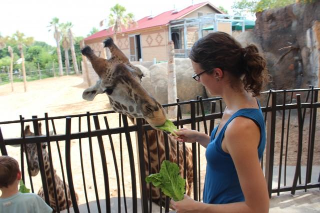healthy relationship houston zoo feeding giraffes