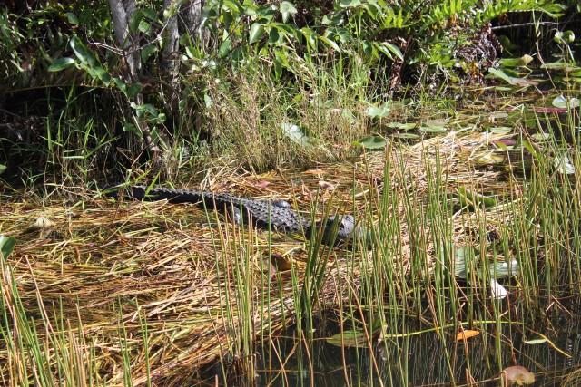 relationship blog florida travel everglades alligator