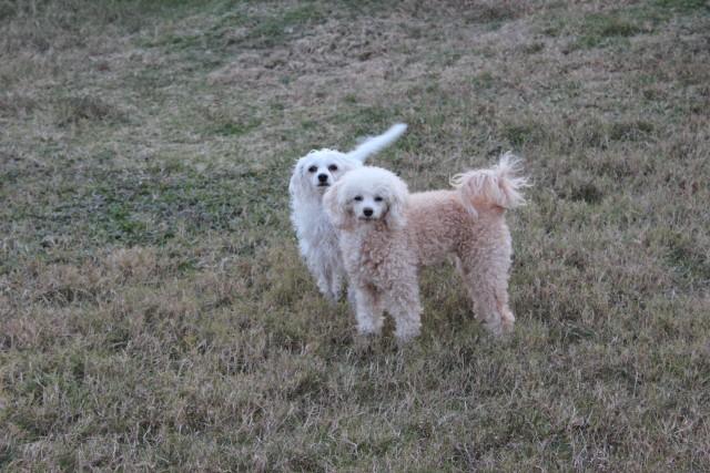 relationship blog dogs