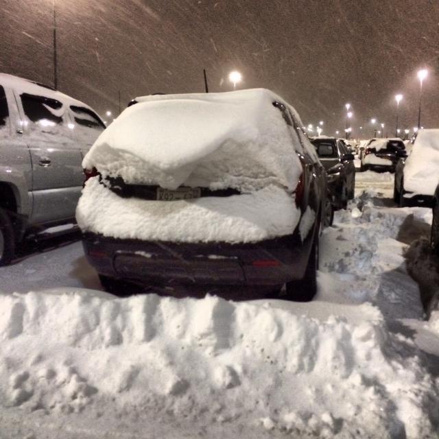 snowy buffalo storm