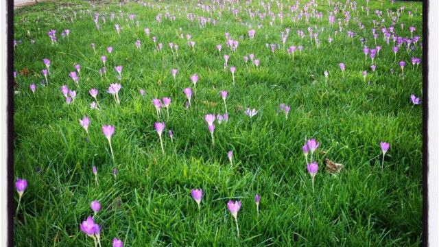 blog flowers speaking