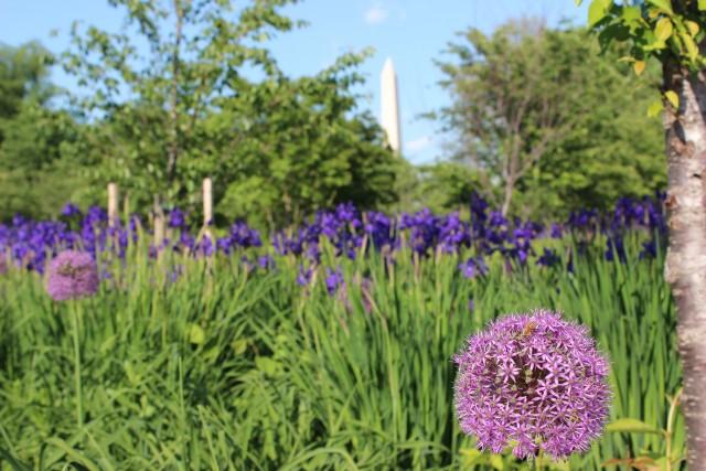 mlk jr memorial washington dc flowers