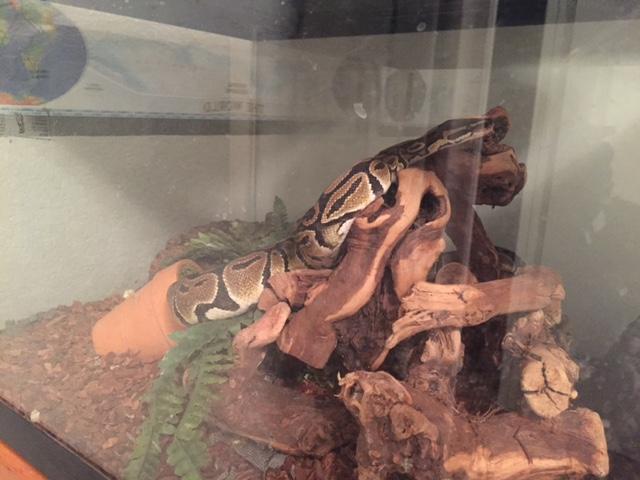 girls weekend snake