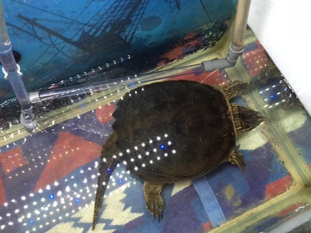 girls weekend turtle