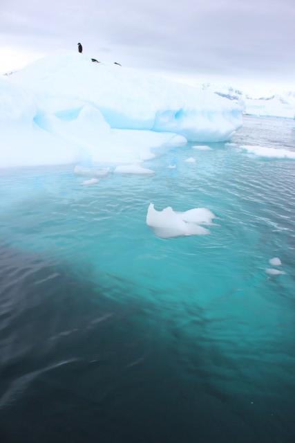 IMG_7747 iceberg 2
