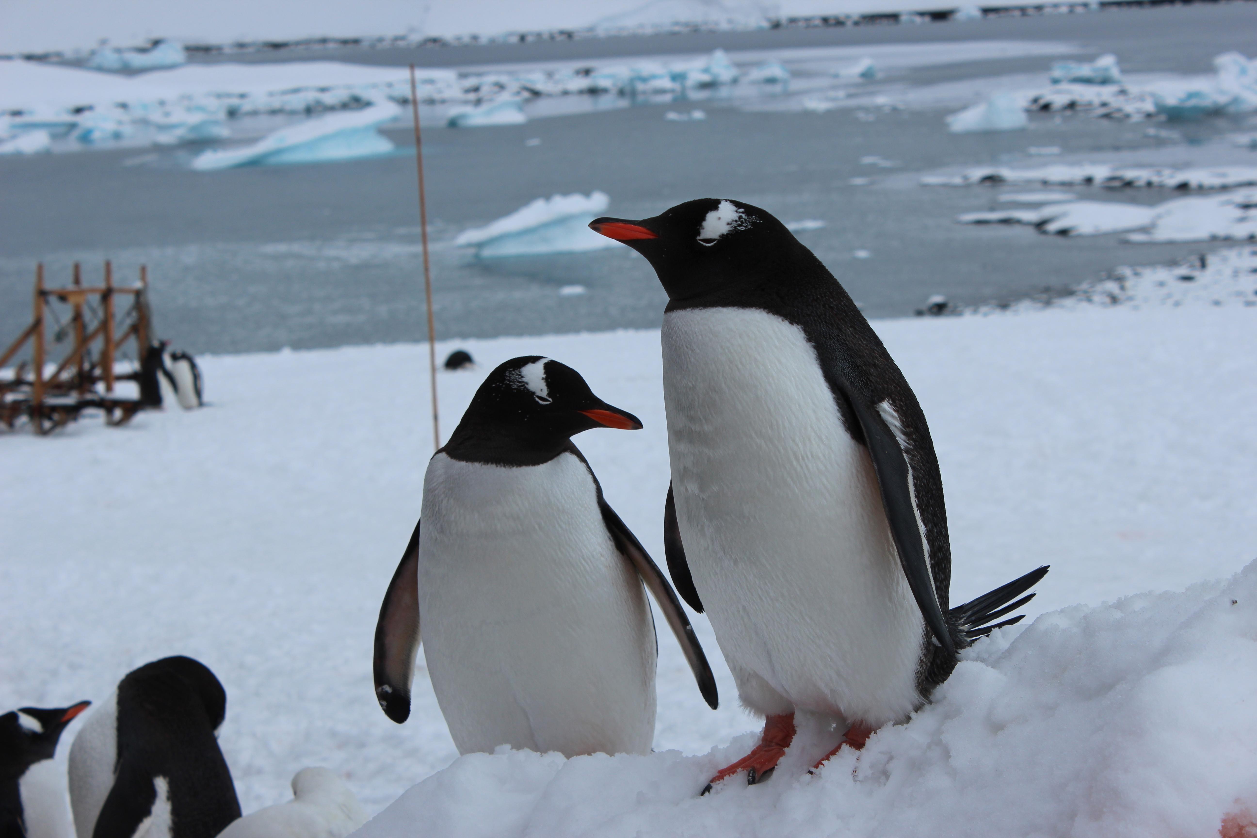 IMG_7897 penguin perfect