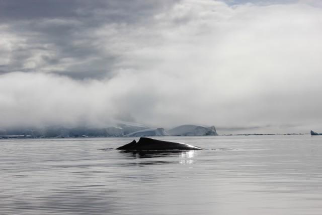 IMG_7993 whale